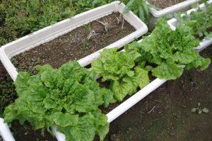 家庭菜園のプランター4