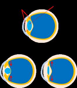 眼球のイラスト