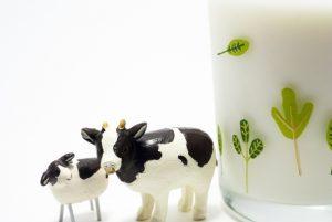 牛のフィギュアと牛乳