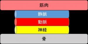 組織 -2