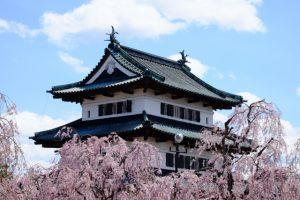 アップの本丸と桜