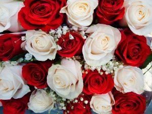 赤白のバラ