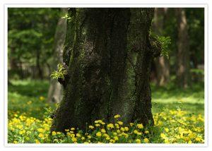 木とタンポポ