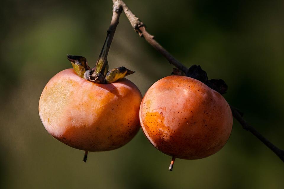 の 年 は 何 八 栗 続き 三 梅 年 年 柿 桃