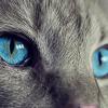 【青が好きな人の特徴と心理】知的クール?癒し効果は超マジック!